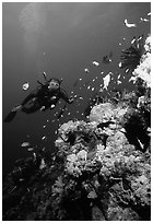 Scuba diver, coral, and fish. The Great Barrier Reef, Queensland, Australia (black and white)