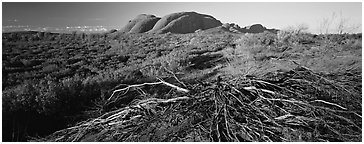 Australian outback, Olgas. Olgas, Uluru-Kata Tjuta National Park, Northern Territories, Australia (Panoramic black and white)