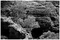 Trees and rock wall in Kings Canyon,  Watarrka National Park. Northern Territories, Australia ( black and white)