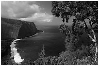 Tree and coastline above Waipio Valley. Big Island, Hawaii, USA ( black and white)