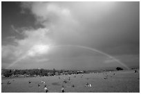 Rainbow over grassy cemetery. Maui, Hawaii, USA (black and white)