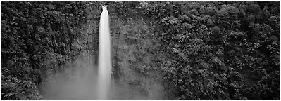 Tropical waterfall. Akaka Falls State Park, Big Island, Hawaii, USA (Panoramic black and white)