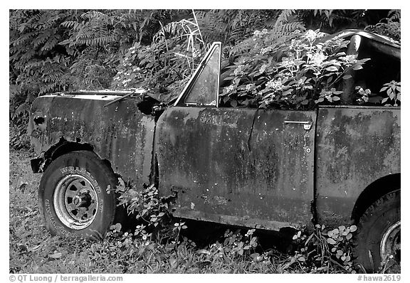 Wrecked truck invaded by flowers. Maui, Hawaii, USA