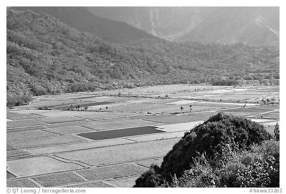 Patchwork taro fields in Hanalei Valley, mid-day. Kauai island, Hawaii, USA (black and white)
