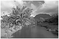 River near Hanalei. North shore, Kauai island, Hawaii, USA ( black and white)