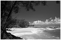 Horsetail Ironwoods framing beach with turquoise waters  near Haena. North shore, Kauai island, Hawaii, USA (black and white)