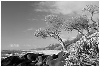 Boulders, trees, and beach, Lydgate Park, early morning. Kauai island, Hawaii, USA (black and white)