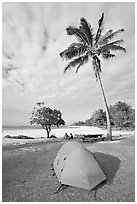 Tent and palm trees, Haena beach park. North shore, Kauai island, Hawaii, USA ( black and white)
