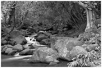 Stream, Haena beach park. North shore, Kauai island, Hawaii, USA ( black and white)