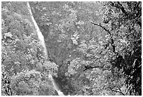 Kahuna Falls. Akaka Falls State Park, Big Island, Hawaii, USA ( black and white)