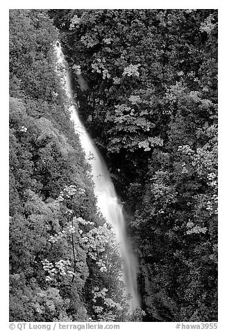 Kahuna Falls in a lush valley. Akaka Falls State Park, Big Island, Hawaii, USA (black and white)