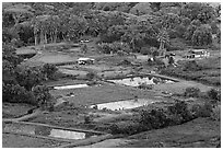 Taro fields and farms from above, Waipio Valley. Big Island, Hawaii, USA ( black and white)