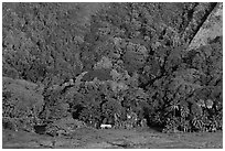 Houses at the base of steep Waipio Valley walls. Big Island, Hawaii, USA ( black and white)