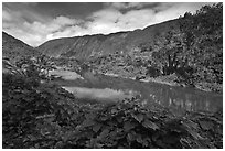 River, Waipio Valley. Big Island, Hawaii, USA ( black and white)
