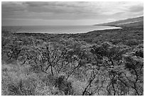 Mamalu Bay seen from verdant hills. Maui, Hawaii, USA ( black and white)