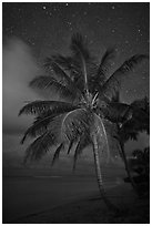 Palm tree, beach and stars. Kauai island, Hawaii, USA ( black and white)