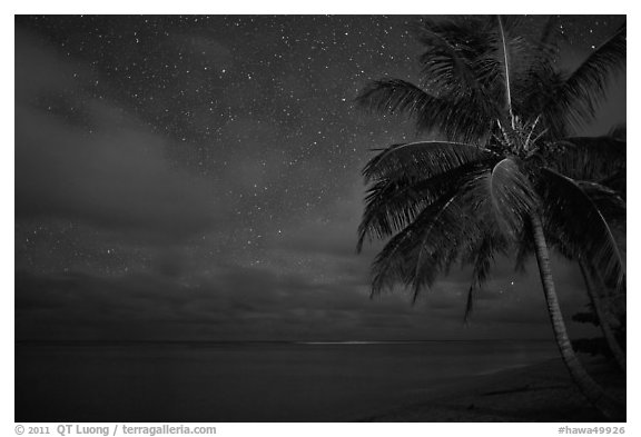 Palm tree, stars and ocean. Kauai island, Hawaii, USA (black and white)
