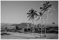 Golf course with palm trees, Punaluu. Big Island, Hawaii, USA ( black and white)