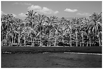 Black sand beach and palm trees, Punaluu. Big Island, Hawaii, USA ( black and white)