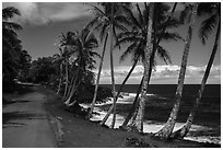 Oceanside road with palm trees, Puna. Big Island, Hawaii, USA ( black and white)