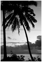 Cocunet trees at sunset, Leone Bay. Tutuila, American Samoa (black and white)