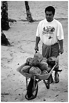Villager carying coconuts in a wheelbarel. Tutuila, American Samoa ( black and white)