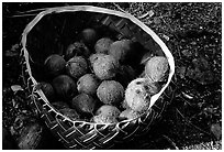 Coconuts contained in a basket made out of a single palm leaf. Tutuila, American Samoa ( black and white)