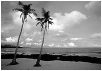 Palm trees at Coconut Point. Tutuila, American Samoa (black and white)