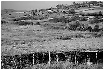 Cultivation. Shan state, Myanmar ( black and white)