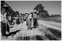 Women doing road construction work. Shan state, Myanmar ( black and white)