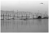 Fence, birds, and hill at dawn. Inle Lake, Myanmar ( black and white)