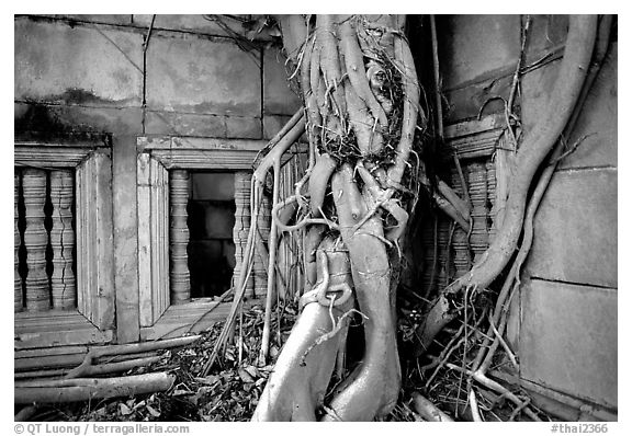 Roots of giant tree and khmer-style temple. Muang Boran, Thailand