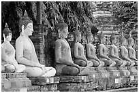 Buddha statues, swathed in sacred cloth as a sign of reverence, Wat Chai Mongkon. Ayutthaya, Thailand ( black and white)