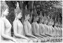 Row of Buddha images in Wat Chai Mongkon, reverently swathed in cloth. Ayutthaya, Thailand ( black and white)