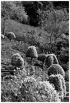 Flower garden in Hmong village. Chiang Mai, Thailand ( black and white)