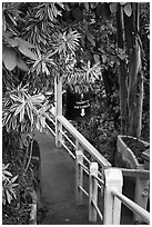 Path, Golden Mount. Bangkok, Thailand ( black and white)