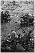 Tombs, islamic burying grounds, Ko Phi-Phi island. Krabi Province, Thailand ( black and white)