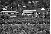 Lush gardens and hillside, Ko Phi-Phi Don. Krabi Province, Thailand (black and white)