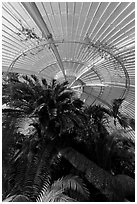 Palm trees and roof in the Palm House. Kew Royal Botanical Gardens,  London, England, United Kingdom (black and white)