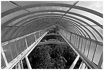 Wrought iron roof of the Palm House. Kew Royal Botanical Gardens,  London, England, United Kingdom (black and white)