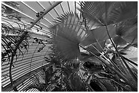 Palms and glass roof, the Palm House. Kew Royal Botanical Gardens,  London, England, United Kingdom (black and white)