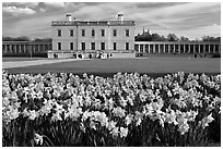 Queen's House and colonnades of the Royal Maritime Museum, with Daffodils in foreground. Greenwich, London, England, United Kingdom (black and white)