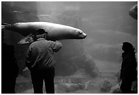 Tourists standing next to the northern sea lion aquarium, Alaska Sealife center. Seward, Alaska, USA (black and white)