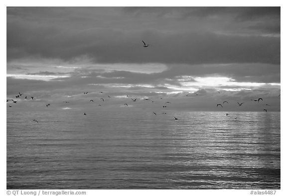 Katchemak Bay. Homer, Alaska, USA (black and white)