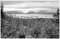 Ketchemak Bay and Kenai Mountains with a foreground of autunm grasses. Homer, Alaska, USA ( black and white)