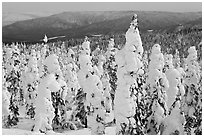 Trees plastered in snow. Alaska, USA ( black and white)