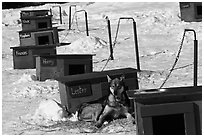 Row of doghouses with dogs names. North Pole, Alaska, USA (black and white)