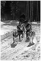 Dog mushing team on forest trail. Chena Hot Springs, Alaska, USA (black and white)