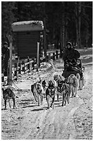 Recreational dog sledding. Chena Hot Springs, Alaska, USA (black and white)