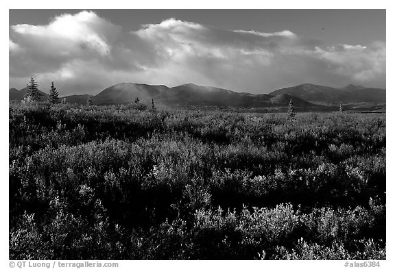Tundra in fall colors  and mountains at sunset. Alaska, USA (black and white)